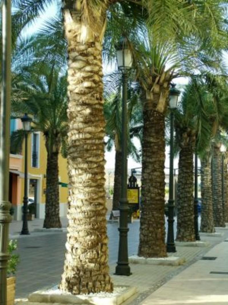 La Noria Outlet Shopping foto miscelánea de las palmeras decorativas